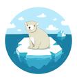 Polar bear on ice vector image
