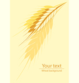 Wheat vertical background vector image vector image