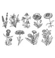 wild flower sketch set isolated on white backdrop vector image