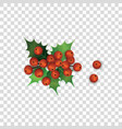 holly berries and leaves christmas plant cartoon vector image vector image