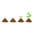 stages growth seeds sprout plant vector image