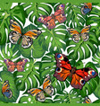 tropical leaves and butterflies vector image