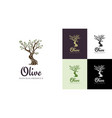elegant olive tree isolated icon creative olive vector image vector image