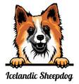 icelandic sheepdog - color peeking dogs - breed vector image vector image