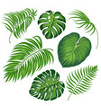leaves tropical plants vector image