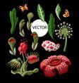 plant predators such as venus flycatcher sundew vector image vector image