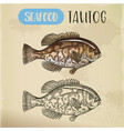 sketch of uss tautog blackfish seafood signboard vector image vector image