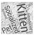 SocializingKittens Word Cloud Concept vector image vector image