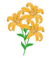 Tiger Lilies vector image vector image