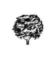 tree icon vintage vector image vector image