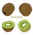 set of hand-drawn kiwi fruit single peeled and vector image