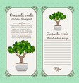 vintage label with crassula ovata plant vector image