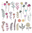 collection with doodle flowers and herbs vector image