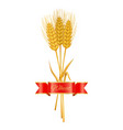 golden wheat or barley ears with copy space poster vector image