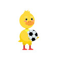 funny little yellow duckling palying soccer ball vector image vector image