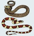 viper snake serpent cobra and python anaconda or vector image vector image