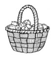 basket with apples engraving vector image