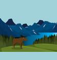canadian landscape with moose scene vector image