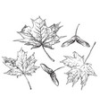 hand drawing leaves 9 vector image vector image