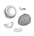 hand drawn of coconut isolated on vector image