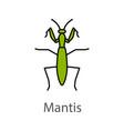 praying mantis color icon vector image