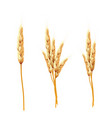 wheat ears and seed isolated vector image