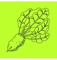Mangelwurzel a root vegetable line vector image vector image