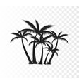 palm tree silhouette vector image