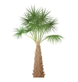 Exotic tropical high detailed palm tree isolated vector image