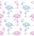 flamingo sketch seamless pattern vector image