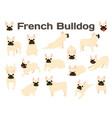 french bulldog in action happy dog vector image