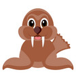 isolated cute sea lion vector image vector image