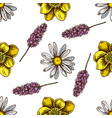 seamless pattern with hand drawn colored celandine vector image