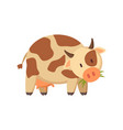 spotted cow chewing grass farm or ranch animal vector image vector image
