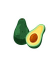 two avocado cut and whole in bright color cartoon vector image