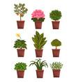 set of pot deciduous flowering fruit plants with vector image