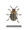 Detailed drawing of the Colorado potato beetle vector image