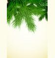 fir tree branch vector image vector image