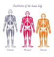 Human Body Constitution Flat Design Concept vector image vector image