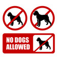 no dogs allowed dog prohibition sign - artwork vector image vector image