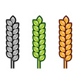 three color corn isolated on the white vector image vector image