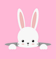 cute white bunny rabbit easter vector image