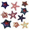 big set sea starfishes summer mood design vector image