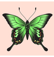 coloured butterfly vector image vector image