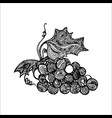 grape ink sketch vector image
