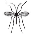hessian fly vintage vector image vector image