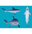 hungry aggressive and scary shark fish vector image vector image