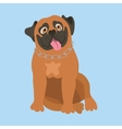 South African Boerboel vector image