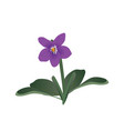 viola flower vector image vector image