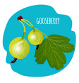 gooseberry with green leaf on blue background vector image vector image